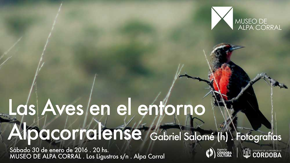 Flyer.-Las-Aves-en-el-entorno-Alpacorralense.-Salome