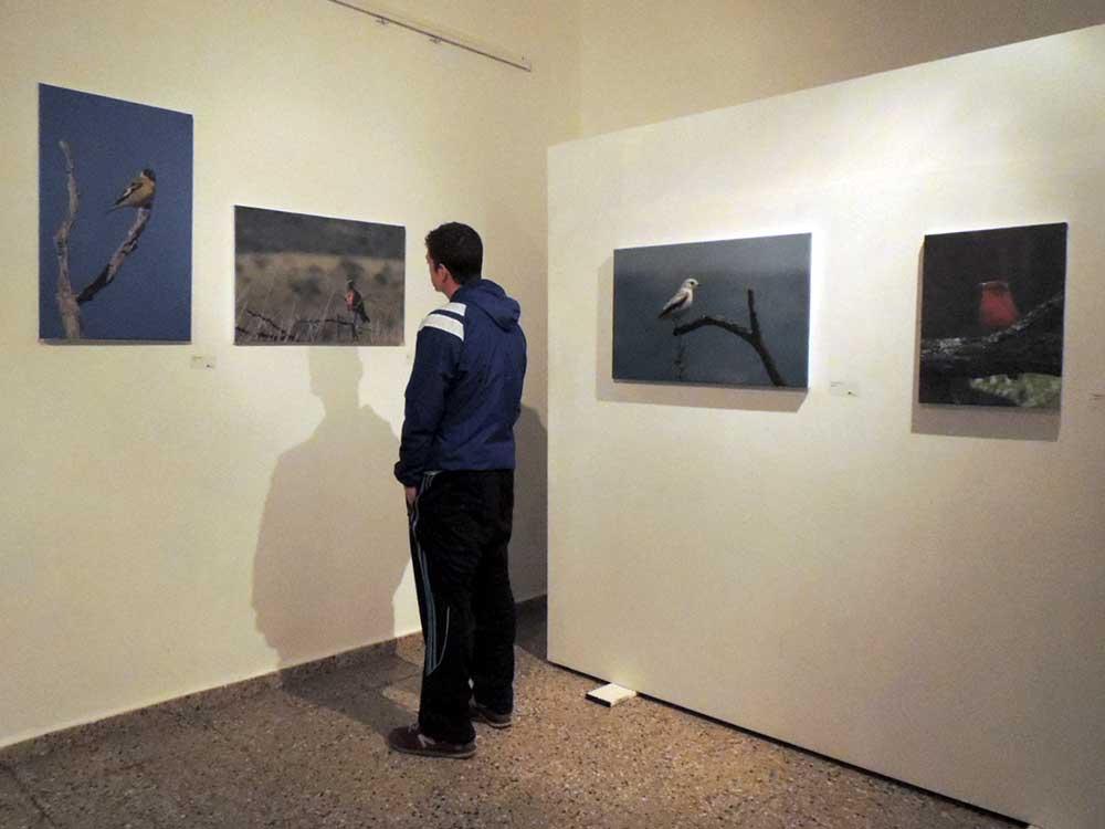aves-en-el-museo-10